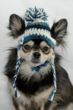 Dog hat crocheted, Variegated Dark Teal and Winter White,Medium, Small or Xsmall  One of our most popular hats! Hand crocheted dog ear flap hat with