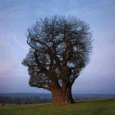 Become one with nature! Find out which tree type best fits your personality! Pranayama, Mother Earth, Mother Nature, Bonsai, Tree Faces, Unique Trees, Foto Art, Plantar, Tree Art