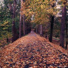 Sidewalk, Country Roads, Halloween, Fall, Autumn, Fall Season, Side Walkway, Walkway, Walkways