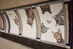 la estación londinense de Clapham Common. Durante dos semanas se han cambiado los anuncios por gatitos.