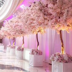 """World Wide Event Designers on Instagram: """"Now here's a gorgeous row of blooming trees !! @onlyminewedding #followOurGrams #wweds . . . . . #photoOfTheDay"""""""