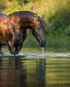 A destination for anyone who loves horses, saving money, or both! Beautiful Horse Pictures, Most Beautiful Horses, All The Pretty Horses, Animals Beautiful, Cute Animals, Beautiful Images, Majestic Horse, Majestic Animals, Cute Horses