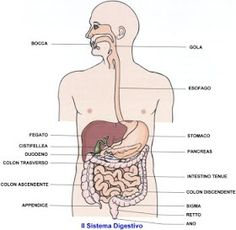 health effects of yoga Biology Art, Reflexology, Greys Anatomy, Medical, Yoga, Education, Memes, School, Health