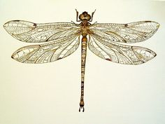 Pinned Dragonfly by Arboris-Silvestre