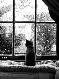 Snuggling up with the pets is never a bad way to spend a rainy day! Rainy day/ Rainy day in the city/ Rainy day in NYC/ Rainy day activities/ Rainy day outfits/ Rainy day pictures/ Rainy day moods/ Rainy day vibes Crazy Cat Lady, Crazy Cats, I Love Cats, Cute Cats, Animals Beautiful, Cute Animals, Wild Animals, Rain Window, Window Bed