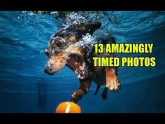 """This is one determined little dog. Diving into a swimming pool to fetch its orange tennis ball, the dachshund is all in — eyes bulging, mouth open, paws reaching — that ball is his. - by Seth Casteel """"Underwater Dogs"""" series Funny Dogs, Cute Dogs, Funny Animals, Cute Animals, Animals Amazing, Amazing Dogs, Funny Humor, Dogs Underwater, Underwater Pictures"""