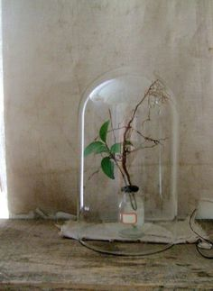 I absolutely adore bell jar decorations. A must in my future home.