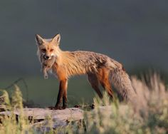 Supper Time Photo by Danny Brown -- National Geographic Your Shot