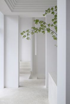 Minimalist Architecture, Interior Architecture, Interior Garden, Home Interior Design, Minimalist Living, Minimalist Design, Terrazzo Flooring, Interior Stairs, White Picture