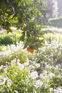 Must have a citrus tree!