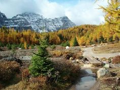 #hiking 12 great trails in Banff National Park, Alberta, Canada