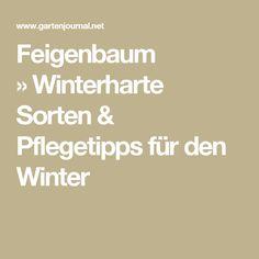 Feigenbaum »Winterharte Sorten & Pflegetipps für den Winter