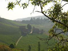 """Die Einzellage """"Hochsulz"""" des Weinguts SKOFF ORIGINAL Vineyard, Mountains, The Originals, Nature, Travel, Naturaleza, Viajes, Vine Yard, Destinations"""
