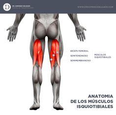 Infografía sobre la Anatomía de los Isquiotibiales www.drdomingodelgado.com