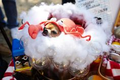 The Clever Dogs Who Won At Halloween #refinery29