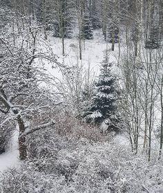 Silence and peace of the winterday in my backyard  #talvi #winter #lumi #snow #tammikuu2018 #january #winterwonderland #winterview #silence #nature #seasonsoffinland #naturelover #lifestyleblogger #nelkytplusblogit #åblogit #ladyofthemess