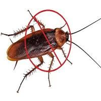 Cockroach, termite, rodent and other pest control service in Chandigarh, Panchkula