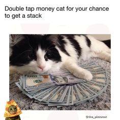Issa good luck kitty Follow mah cat @catnamedpizza  Meme @the_pizzacat there is only one pizzacat. #pizza #cat #cats #catsofinstagram #pizzacat  #pugmob #funny #funnymemes  #pizzacats #trippy #meme  #memes #bayarea #oakland  #spacecats #pizzacatapp #dafuq  #dogsofig  #pugs  #kawaii  #caturday #dankmemes #tacos #internet #pizzaparty #famouscat  SEND ME FUNNY PICS AND ILL TAG U | Baca selengkapnya di website: liputanbaru.com
