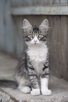 """""""If homeless cats could talk, the would probably say: please give me shelter, food, compagnionship and love, and I'll be yours for life."""" - Susan Easterly  :-)) ❤"""