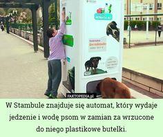 http://joemonster.org/art/36485/Faktopedia_CCCXLIX_co_trzeba_zrobic_zeby_byc_modelka