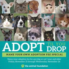 Black Friday may be just around the corner, but why wait to save? We're giving you the opportunity to jump-start your holiday savings now! November 21-26, adopt any dog or cat 1 year or older and you can NAME YOUR OWN ADOPTION FEE! Get details and view adoptable pets at animalfoundation.com!