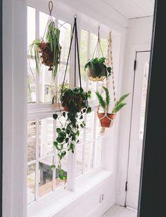 Kitchen window plants window plant shelf indoor kitchen window plants window sill shelf full size of . Window Shelves, Plant Shelves, Plant Window Shelf, Ledge Shelf, Diy Hanging, Hanging Planters, Window Hanging, Recycled Planters, Hanging Herbs