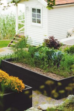 Trend Alert: Stained Raised Beds. Not a dark color, holds in the heat, dries out the soil. How about a crazy color?