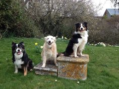 My beautiful dogs Beautiful Dogs, Animals, Cute Dogs, Animales, Animaux, Animal, Animais