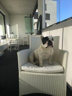 I match with balcony interior really well🤔