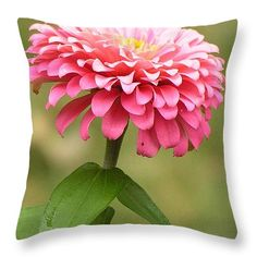 """#865 D486 Zinnia Pink Zinnia Blast Thinking of you 14"""" x 14"""" Throw Pillow by ROBIN LEE MCCARTHY PHOTOGRAPHY.  Multiple sizes available."""