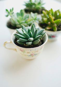 Inspired by Spring: Easy DIY Tea Cup Planter Party Favors, You can appreciate break fast or different time periods applying tea cups. Tea cups also provide ornamental features. Whenever you look at the tea cup types, you will dsicover that clearly. Cacti And Succulents, Planting Succulents, Planting Flowers, Succulent Planters, Succulent Care, Diy Planters, Succulents Online, Succulent Ideas, Tea Cup Planter