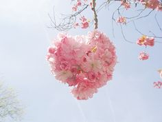 flowers, pink, and heart-bilde
