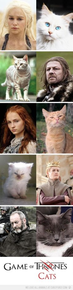 Game of Cats coming soon :P