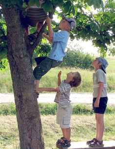 Climbing trees = my kids missed out on the fun and imagination of climbing trees.  Didn't have any big enough to climb!