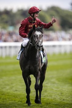 Royal Lodge, Roaring Lion, Muscle Up, Tough Day, Love Affair, Horse Racing, Riding Helmets, Champion