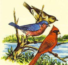 """Bermuda Wildlife Definitive Part 1"" series of 1978"