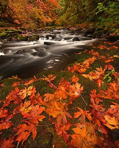 Autumn leaves at the riverside.