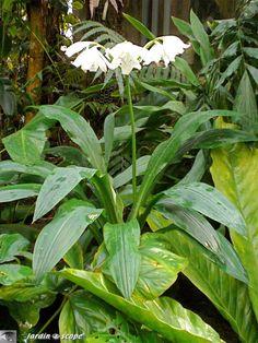 Faune et Flore tropicale  noumea   Le JardinOscope, toute la flore et la faune de nos parcs et jardins