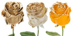 Flower Export News Item Wax Roses by Primera Gold