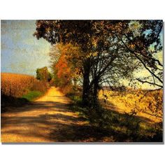 Trademark Fine Art Follow Your Road Canvas Wall Art by Lois Bryan, Size: 30 x 47, Multicolor