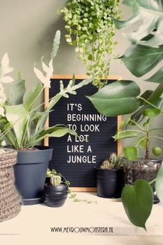 Grappige plantenquote voor je letterbord. #plantquote #plantenquote #letterbord #letterboard #planten #plants #urbanjungle Nature Plants, Fake Plants, Indoor Garden, Indoor Plants, Plants Quotes, Quotes About Plants, Funny Home Decor, Plant Aesthetic, Room With Plants
