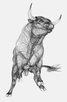 Drawings of Bulls Made from Continual Contours | Marcus James
