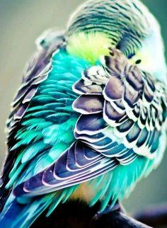 Pretty bird feathers
