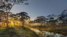 Nature in Ravensthorpe, Australia (salmon gums cordingup creek) - a photo by Alan Carmichael