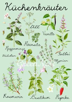 Illustration mit Kräutern für die Küche, Plakat als Deko für die Küche / kitchen decoration: illustrated kitchen herbs made by Vintage Paper Goods via DaWanda.com