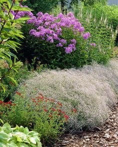 Baby's breath • Gypsophila paniculata • Plants & Flowers • 99Roots.com