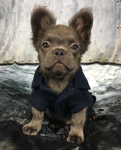 Ok, you might just be one of the cutest babies I have ever seen! That face, that beautiful fur and that fab coat, priceless!!!