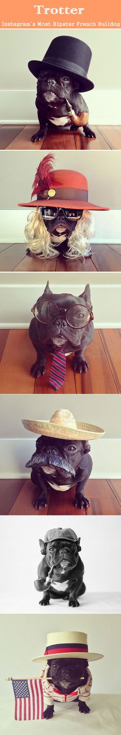 Instagram's Most Hipster French Bulldog