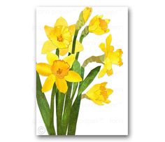 """DAFFODILS - Blank Greeting Card - 5""""x7"""" Springtime Flowers - Also available as a Print with a Custom Mat - Great Gift"""