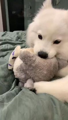 Cute Funny Dogs, Cute Funny Animals, Cute Cats, Super Cute Animals, Cute Little Animals, Cute Baby Puppies, Cute Dogs Breeds, Cute Animal Photos, Fluffy Animals